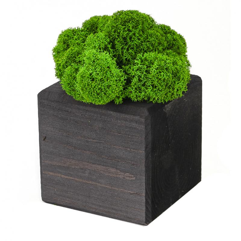 Интерьерный мох MossCube Эбен Зеленый